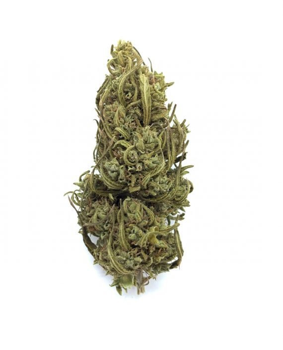 La Sicula Cannabis Light Legale- Saint Mary